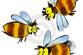 Цветочная пыльца – это целый витами...
